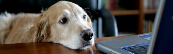 A picture of a dog looking at a laptop