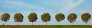 7 trees in a row